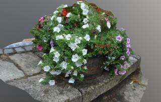 Photogrammetry Plant